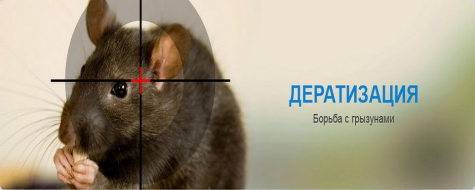 deratizatsiya_krysy